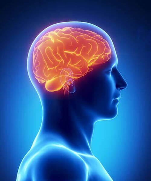 nootropy-nauka-pamiec-mozg