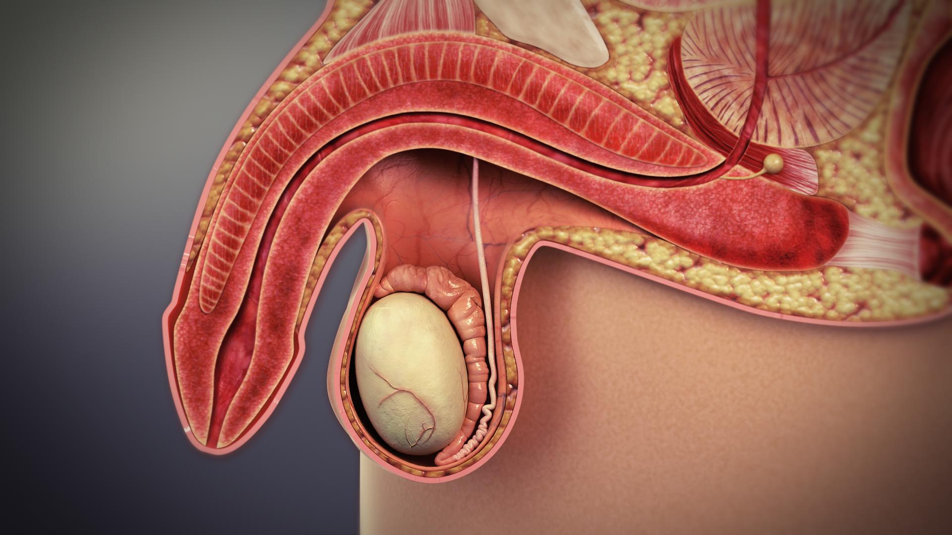 Objawy raka gruczołu krokowego