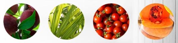 Jakie są główne składniki VaricOff?