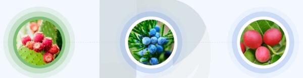 Varikosette - składniki i formuła